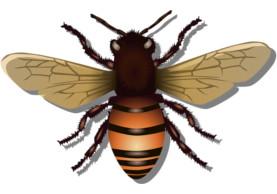 Včelaření v Kosatci